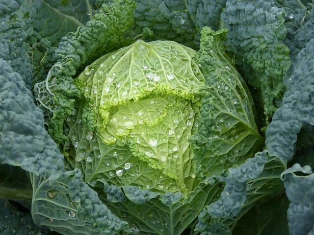 foods-that-burn-fat-cabbage