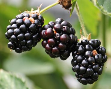 antioxidant-fruits-blackberries
